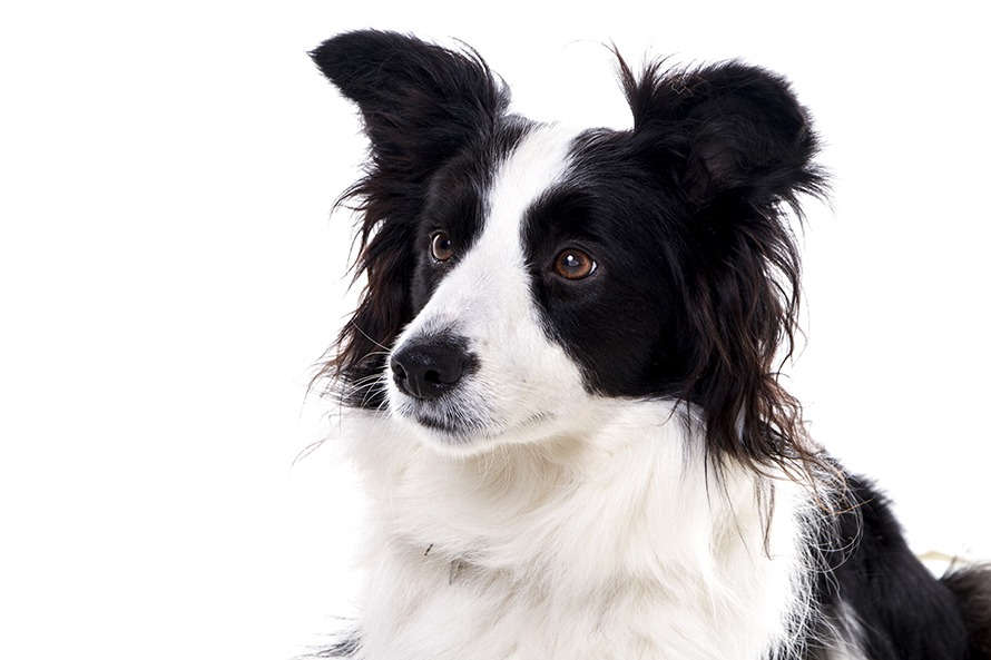 dog photo shoot
