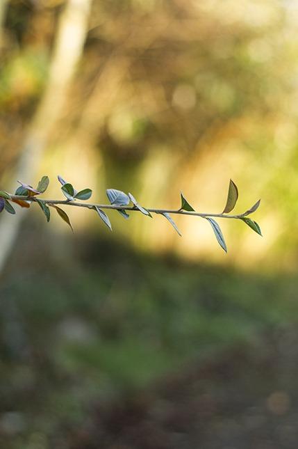 leaves golden hour dof