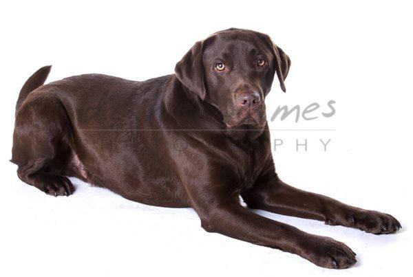 dog portrait dudley