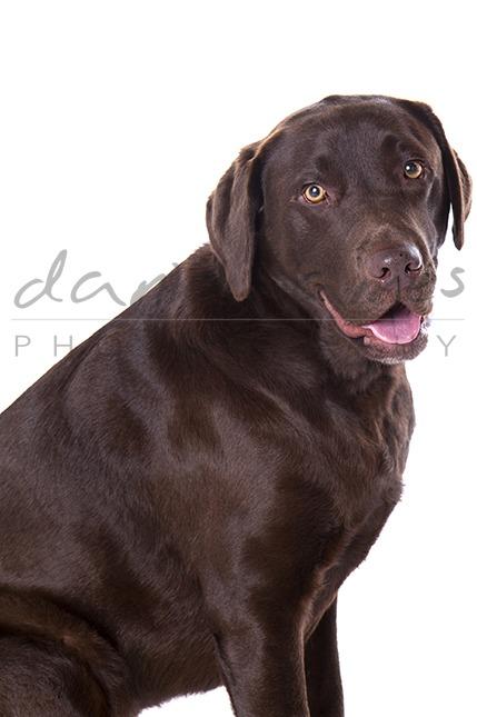 dog portrait midlands