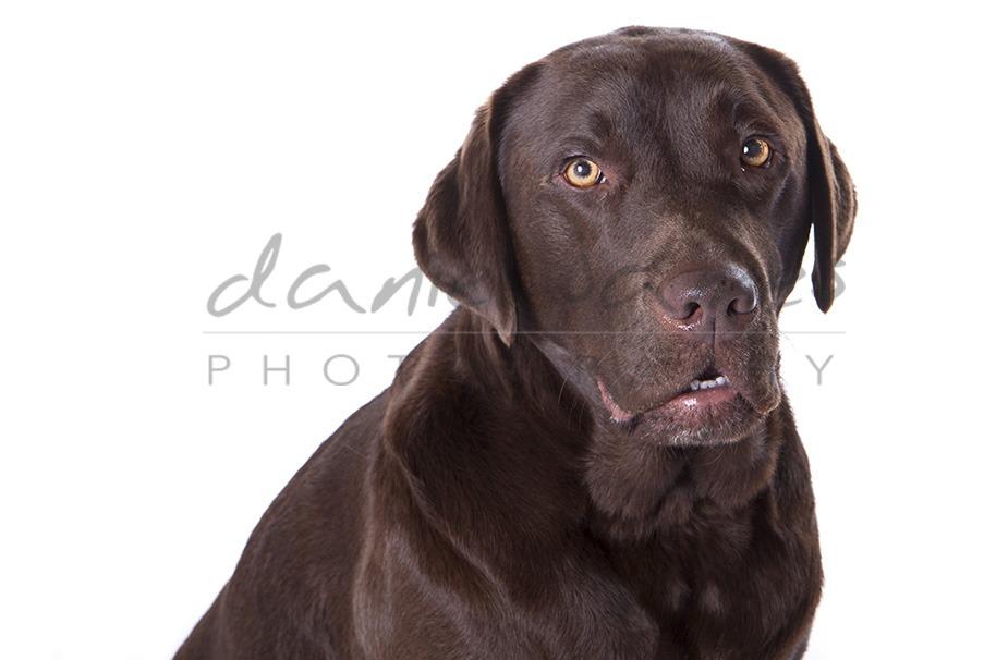 pet portrait dudley