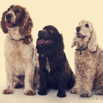 kidderminster pet photographer