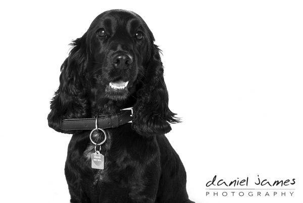 birmingham pet portrait photographers