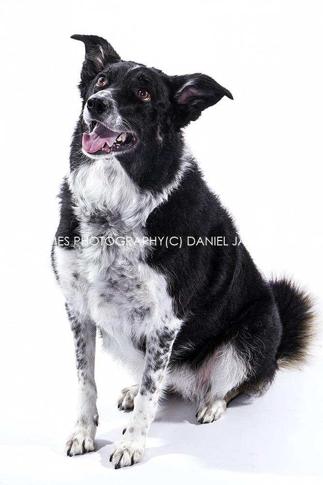 dog photo shoot photographer
