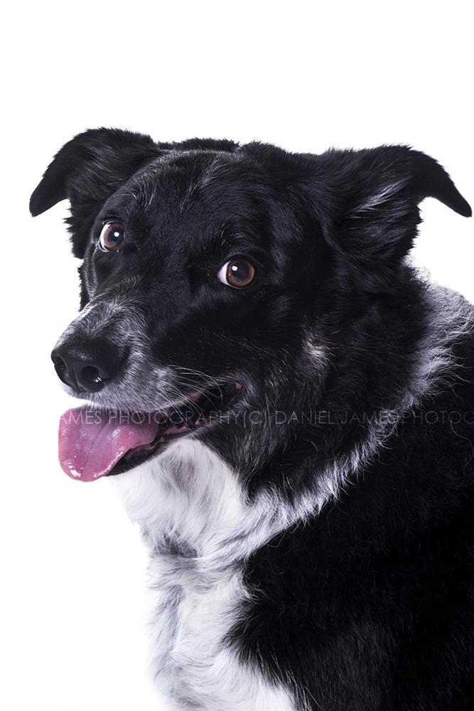 dog photographers