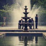 arley arboretum photo