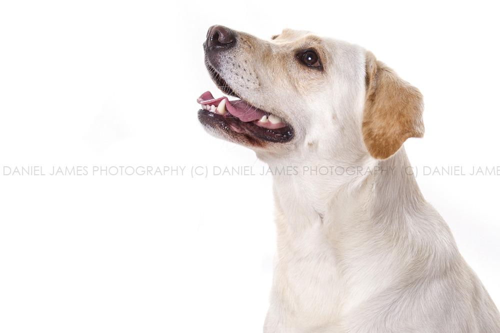 birmingam pet photographers