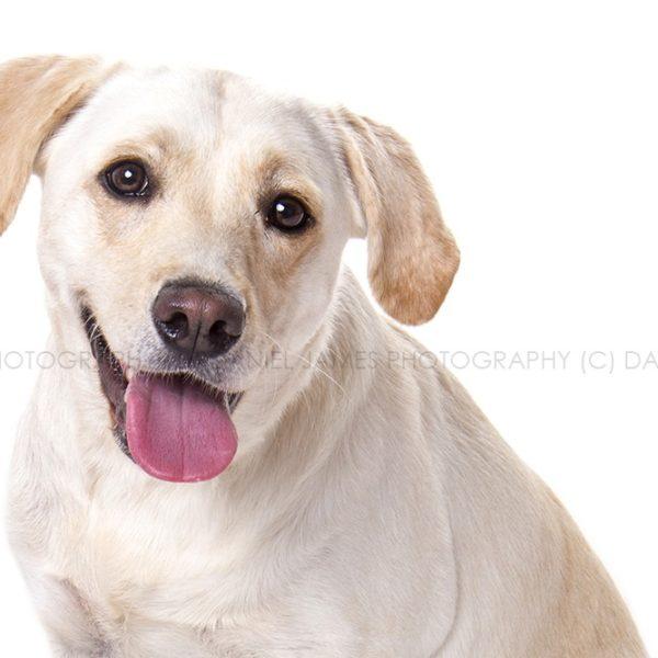 pet portrait photographer birmingham