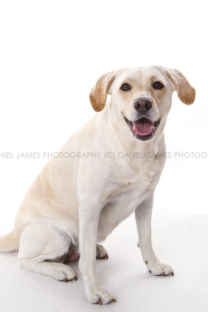 pet portrait photographers birmingham