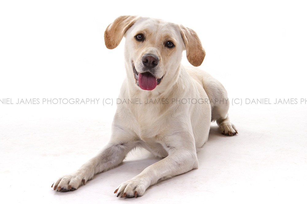 pet portrait photography birmingham