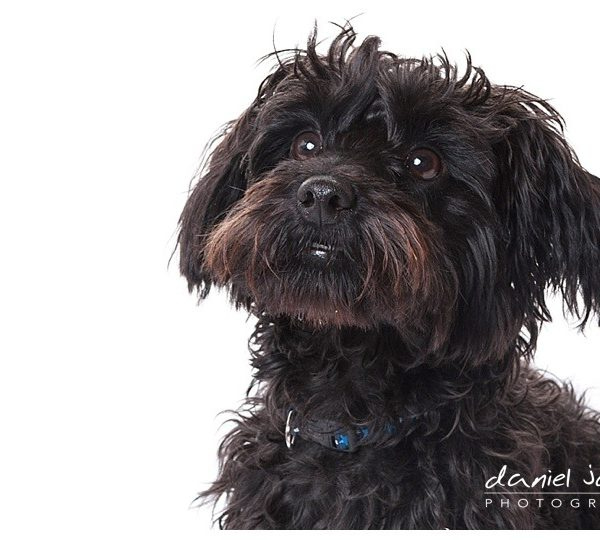 pet portrait midlands