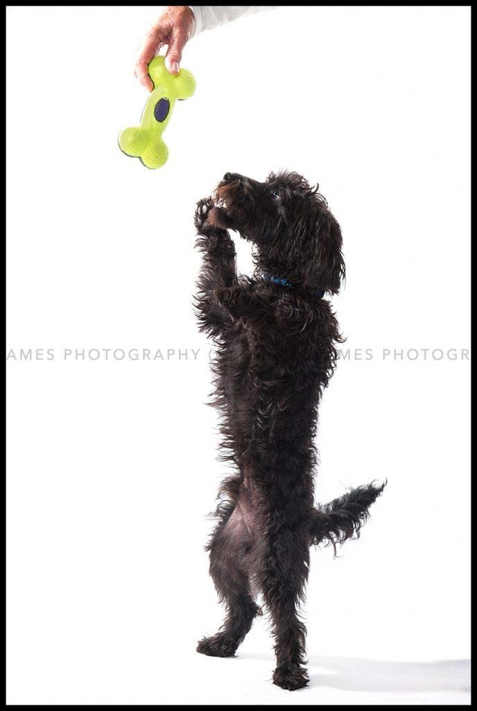 pet portrait photograph dudley