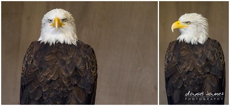 eagle warwick castle