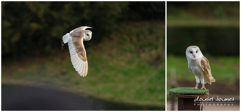 owls warwick castle