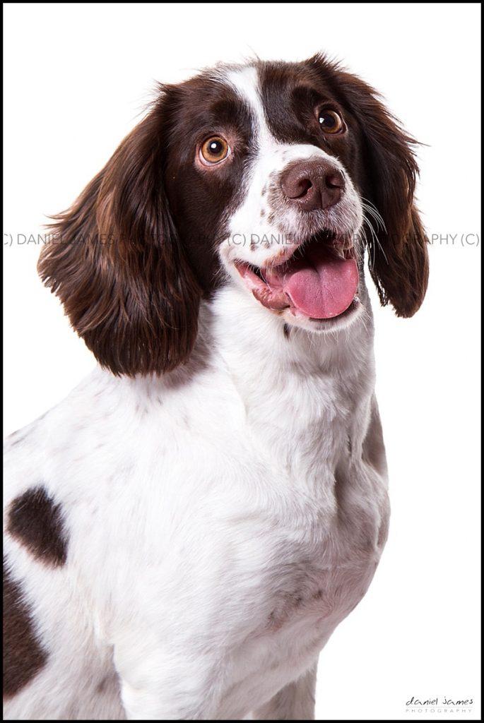 pet portrait photographer