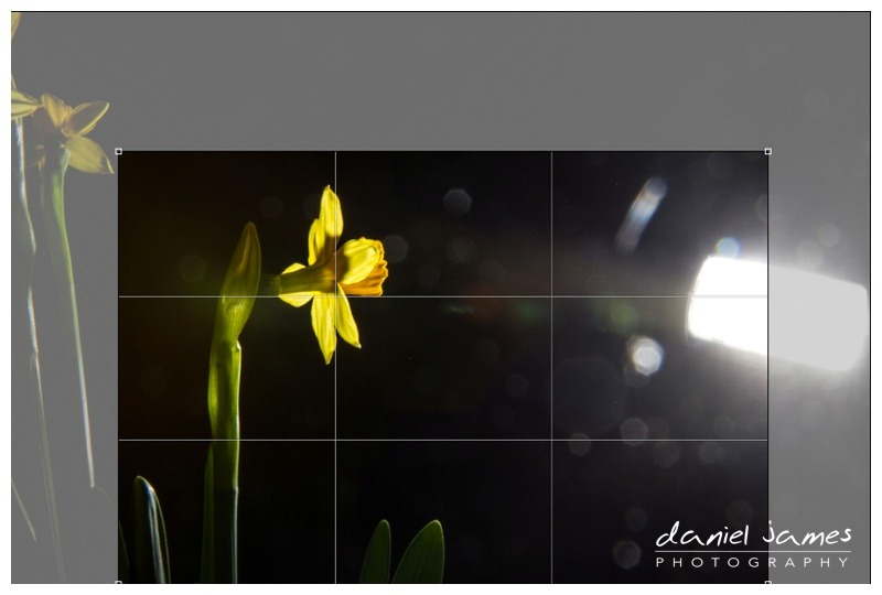 cropping photograph flower photoshop
