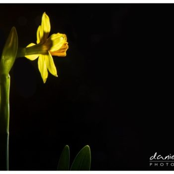 flash flower finished photograph