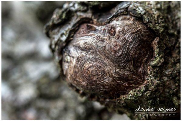 wood knot macro closeup