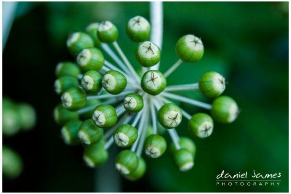 green buds tree