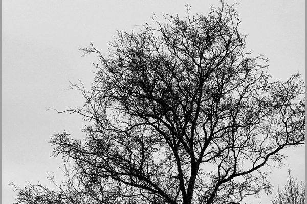 black white tree silhouette