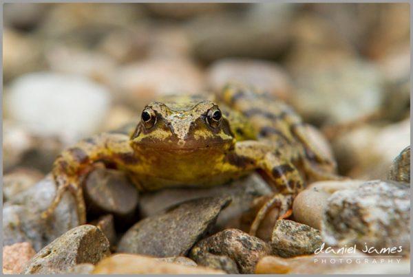 frog stones gravel macro