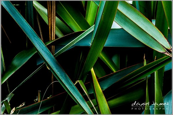 green leaves plant cactus