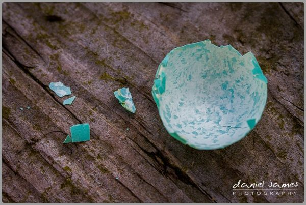 blackbird blue egg shell broken macro