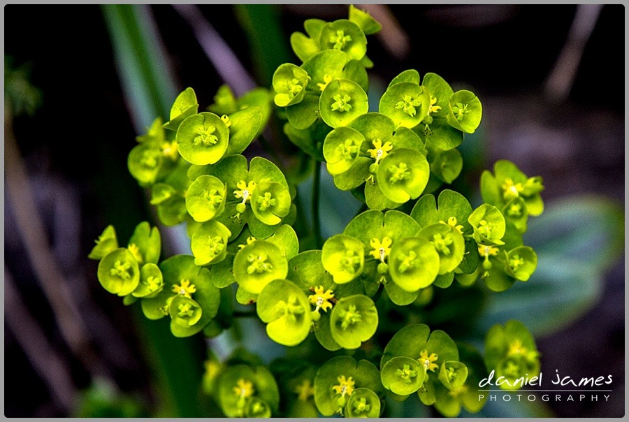 green succulent plant macro