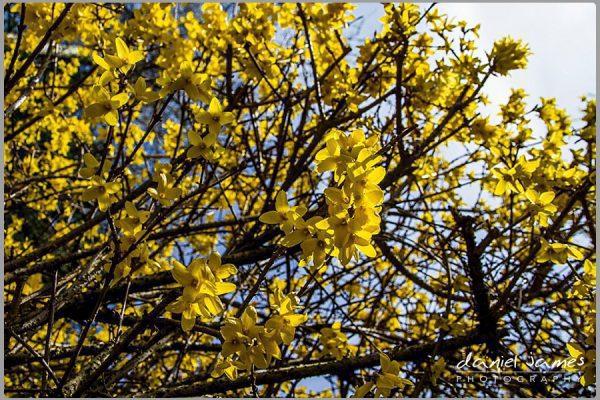 blossom tree nature yellow
