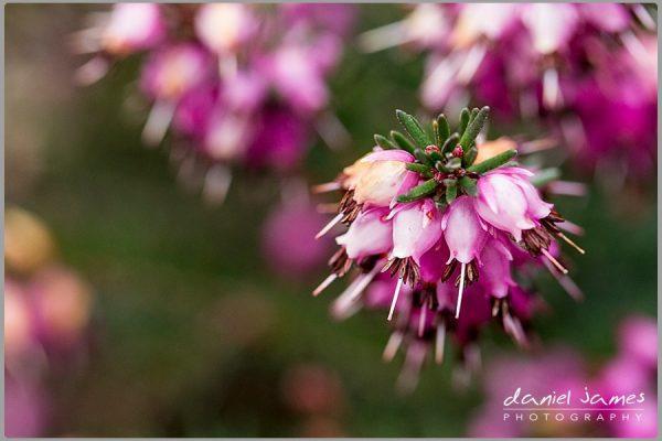 purple plant flower macro