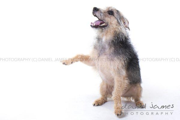 stourbridge pet photo shoot photography