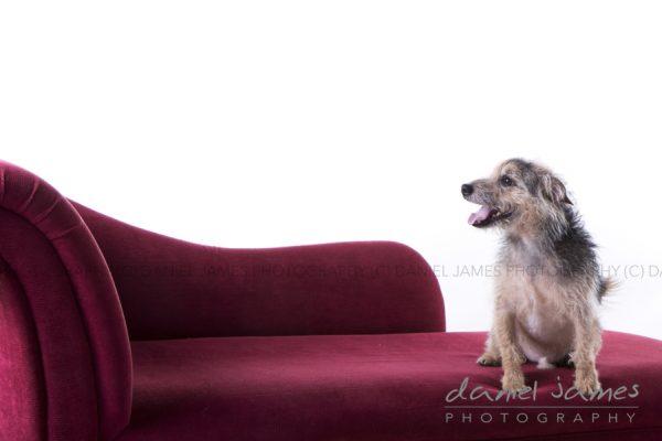 stourbridge pet portrait photographer