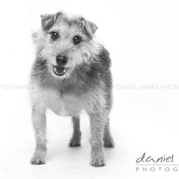 stourbridge pet portrait photography