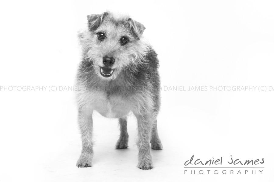 stourbridge pet portrait photography