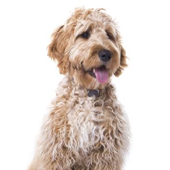 dog photoshoot