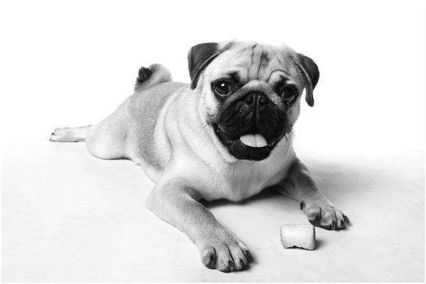 dog photographer stourbridge