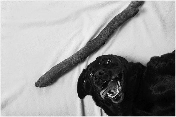 stourbridge dog photographer
